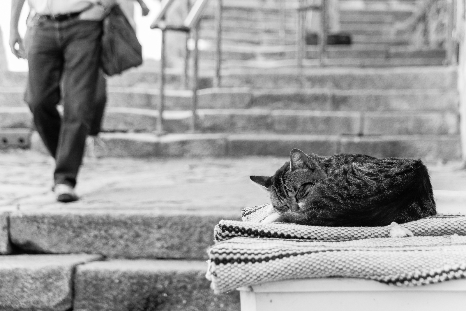 <h5>Let sleeping cats lie</h5><p>By Andrea Edwards</p>