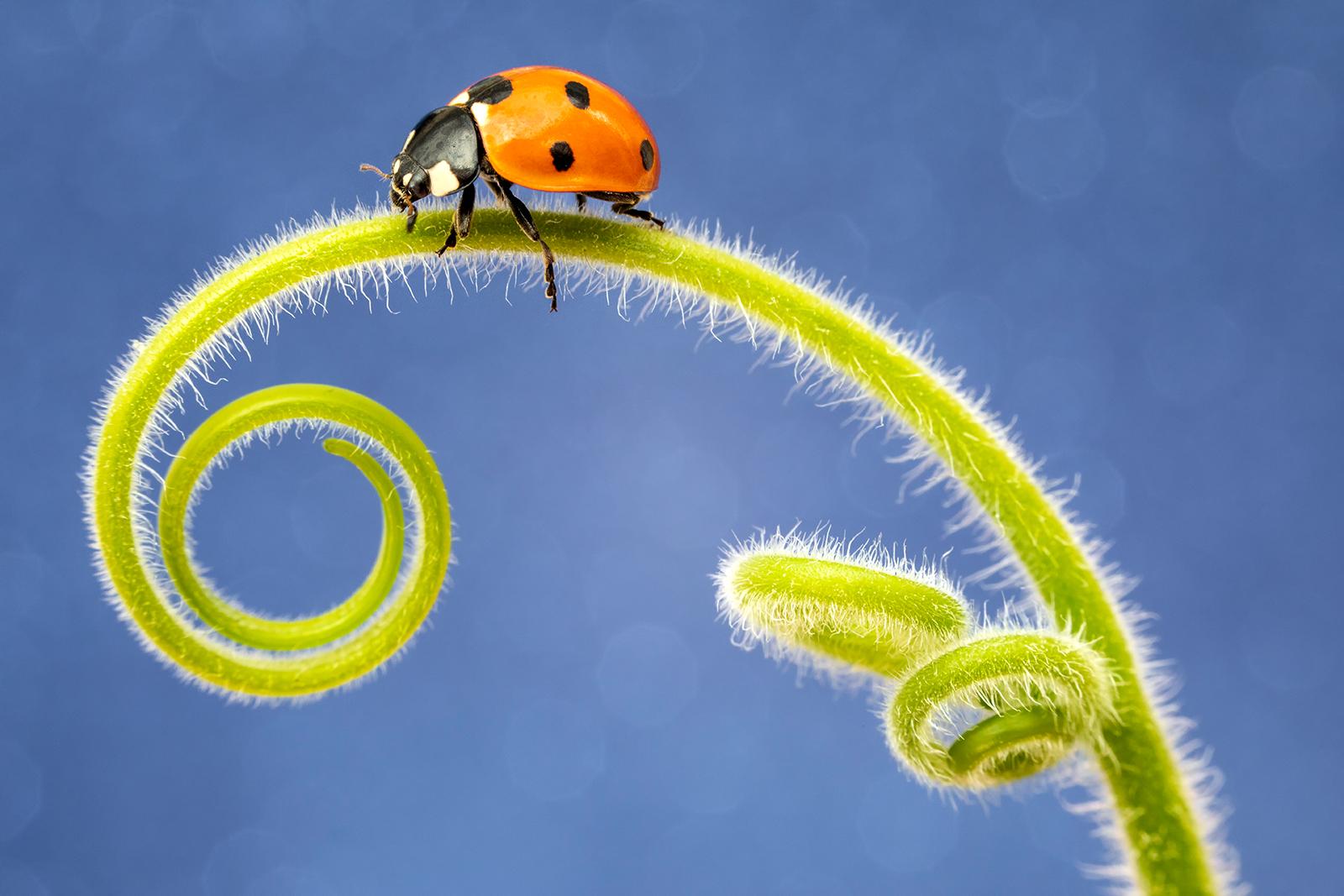 <h5>Ladybird curls</h5><p>By Sophia Spurgin</p>