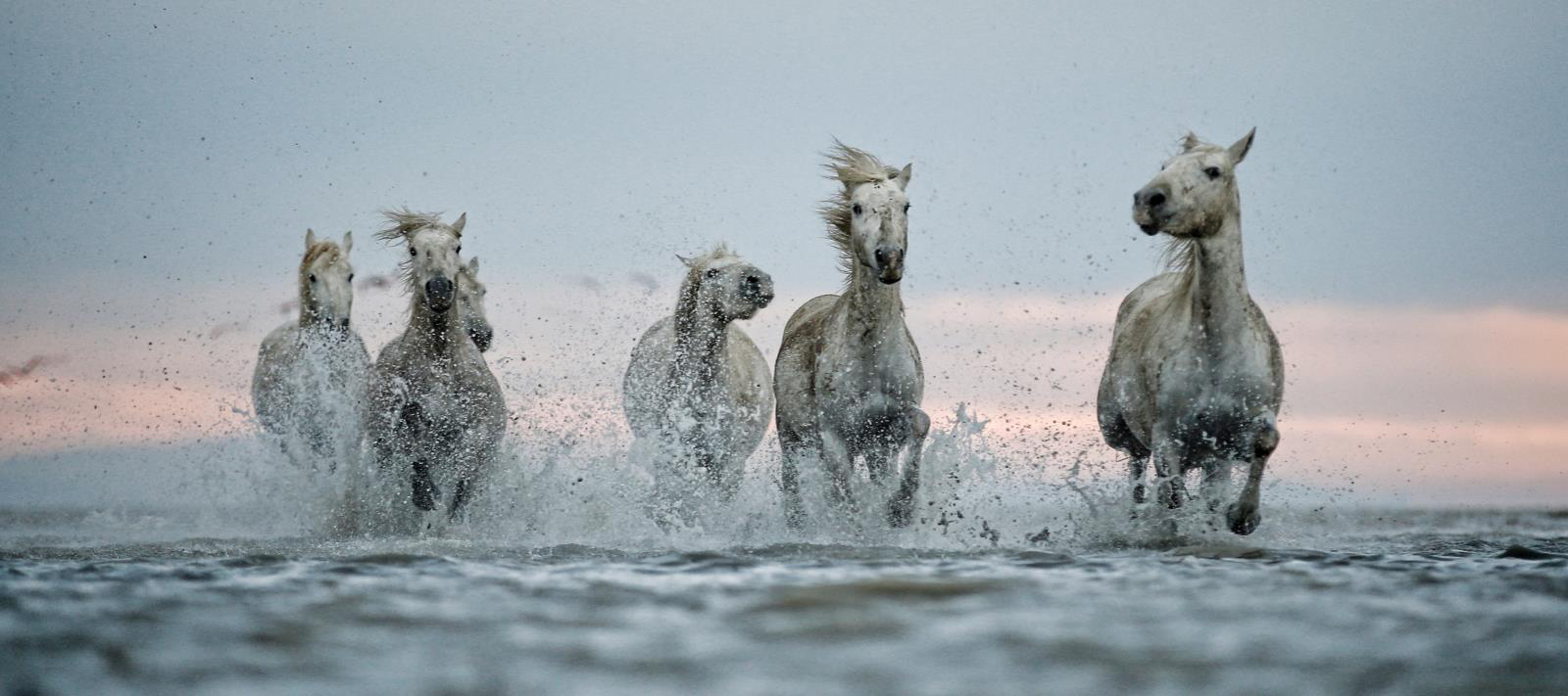 <h5>White Horses</h5><p>By Colin Brister</p>