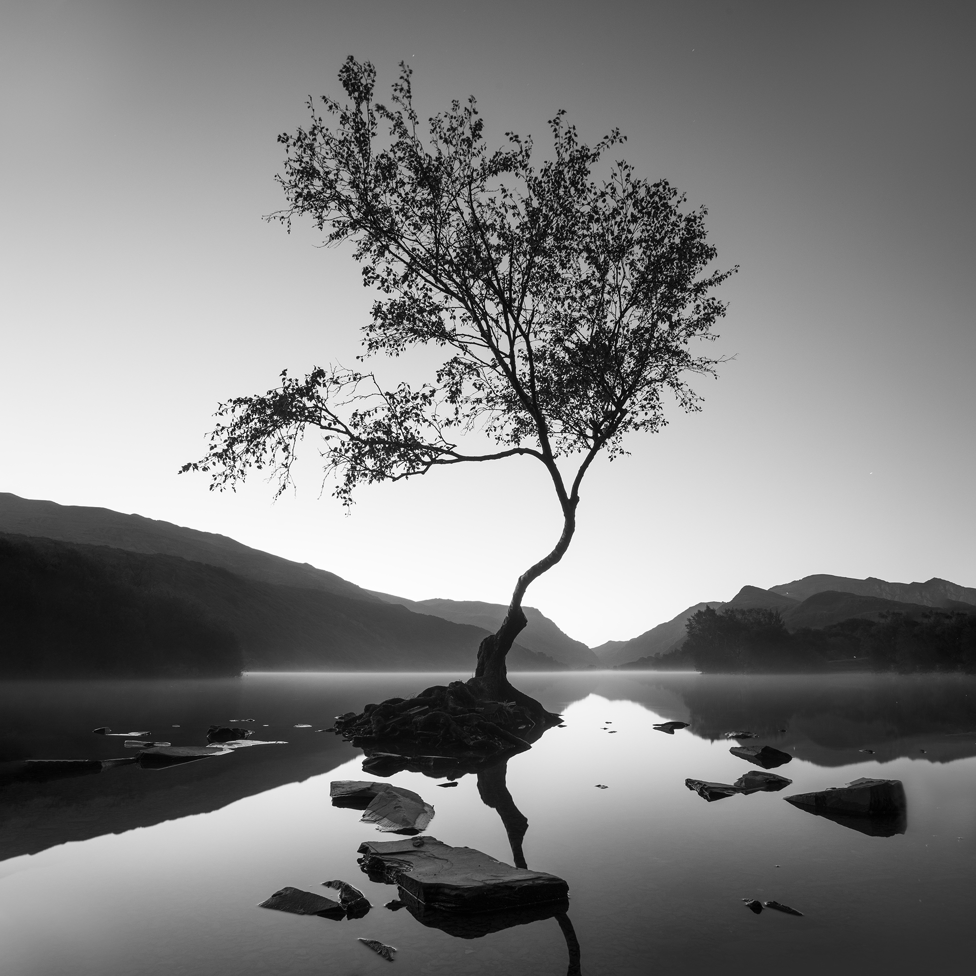 <h5>The Tree at Llyn Padarn </h5><p>Monochrome print, by Sophia Spurgin																																																																				</p>