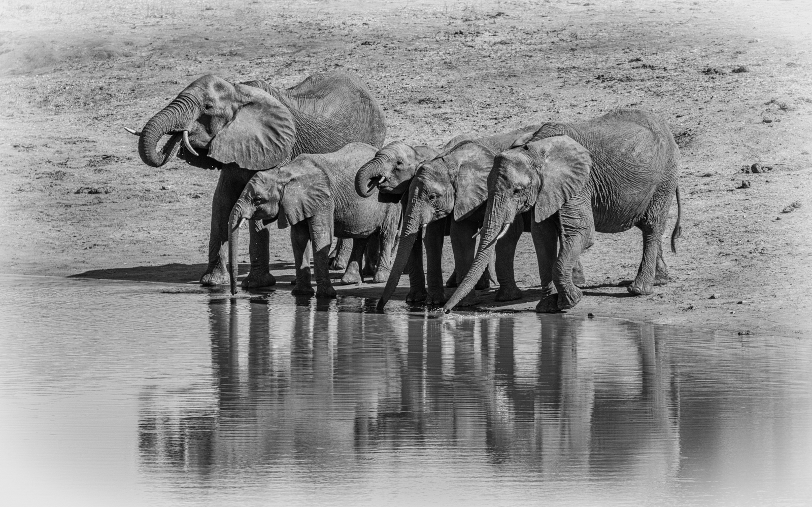 <h5>The Watering Hole</h5><p>Steve Bancroft - Open</p>
