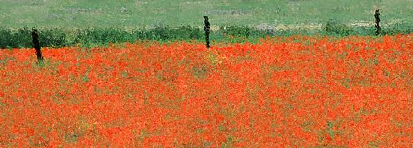 Fiona Fraser-Thomson LRPS_3) Impressionism -  Poppy Fields