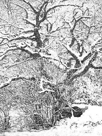 Fiona Fraser-Thomson LRPS_6) A Pencil Sketch of a Snow-Laden Tree
